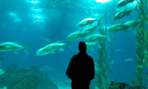 Lisbon - Oceanarium